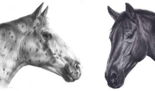 Pferde malerisch gezeichnet mit Kohle